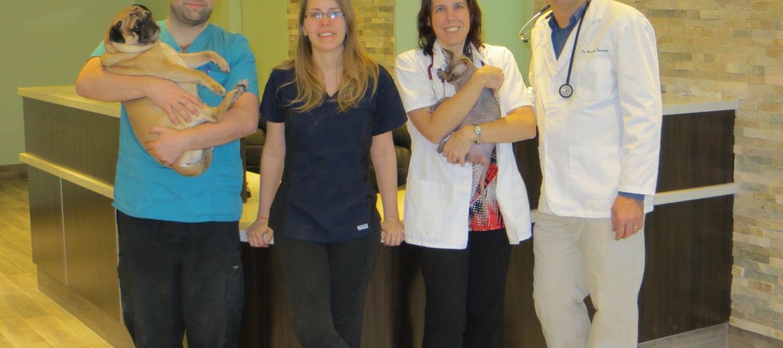 Vétérinaire dans Blackburn Hamlet offre ses services pour Ottawa Gloucester Orleans Chapel Hill Pineview Beacon Hill for chiens et chats